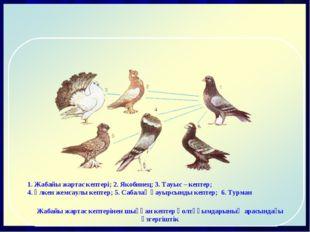 1. Жабайы жартас кептері; 2. Якобинец; 3. Тауыс – кептер; 4. Үлкен жемсаулы к