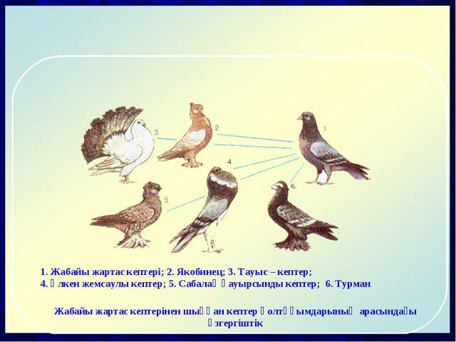 1. Жабайы жартас кептері; 2. Якобинец; 3. Тауыс – кептер; 4. Үлкен жемсаулы к...