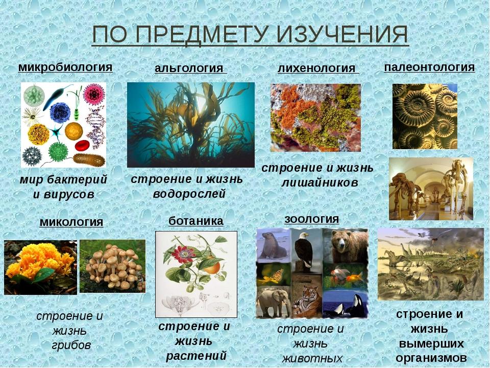 ПО ПРЕДМЕТУ ИЗУЧЕНИЯ микробиология мир бактерий и вирусов ботаника строение и...