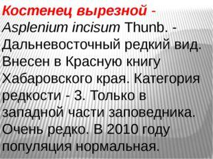 Костенец вырезной- AspleniumincisumThunb. - Дальневосточный редкий вид. Вн