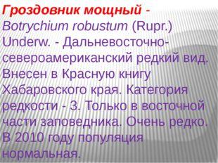 Гроздовник мощный- Botrychiumrobustum(Rupr.) Underw. - Дальневосточно-севе