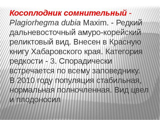 Косоплодник сомнительный- PlagiorhegmadubiaMaxim. - Редкий дальневосточный...