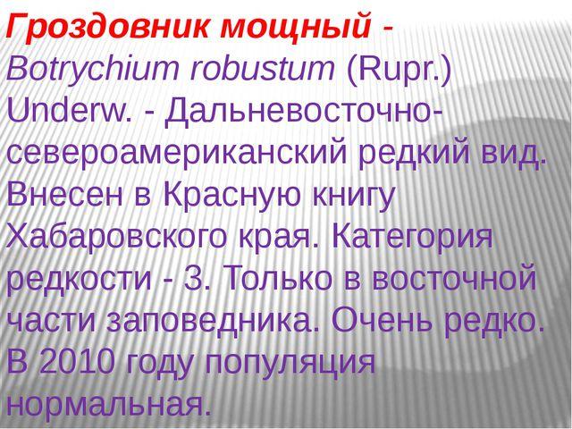 Гроздовник мощный- Botrychiumrobustum(Rupr.) Underw. - Дальневосточно-севе...