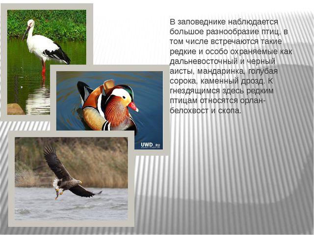 В заповеднике наблюдается большое разнообразие птиц, в том числе встречаются...