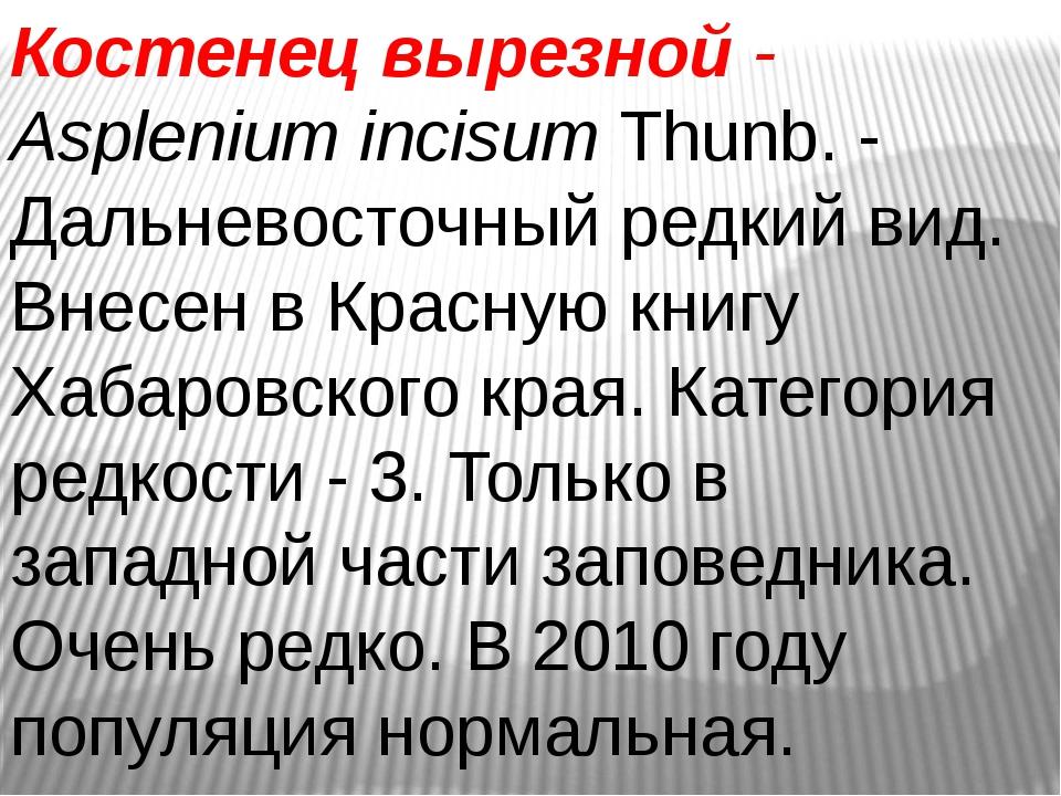Костенец вырезной- AspleniumincisumThunb. - Дальневосточный редкий вид. Вн...