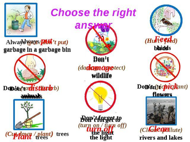 Always (put / don't put) garbage in a garbage bin (Hurt / feed) birds (Cut d...