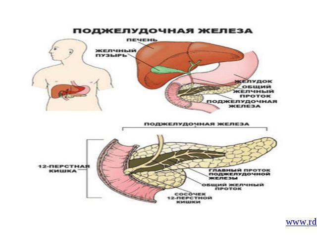 www.rda.org/ru