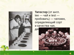 Титестер (от англ. tee—чай иtest— пробовать)— человек, определяющий сор