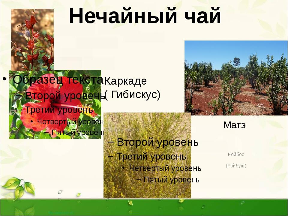Ройбос (Ройбуш) Нечайный чай Каркаде ( Гибискус) Матэ Нечайный чай- это раст...