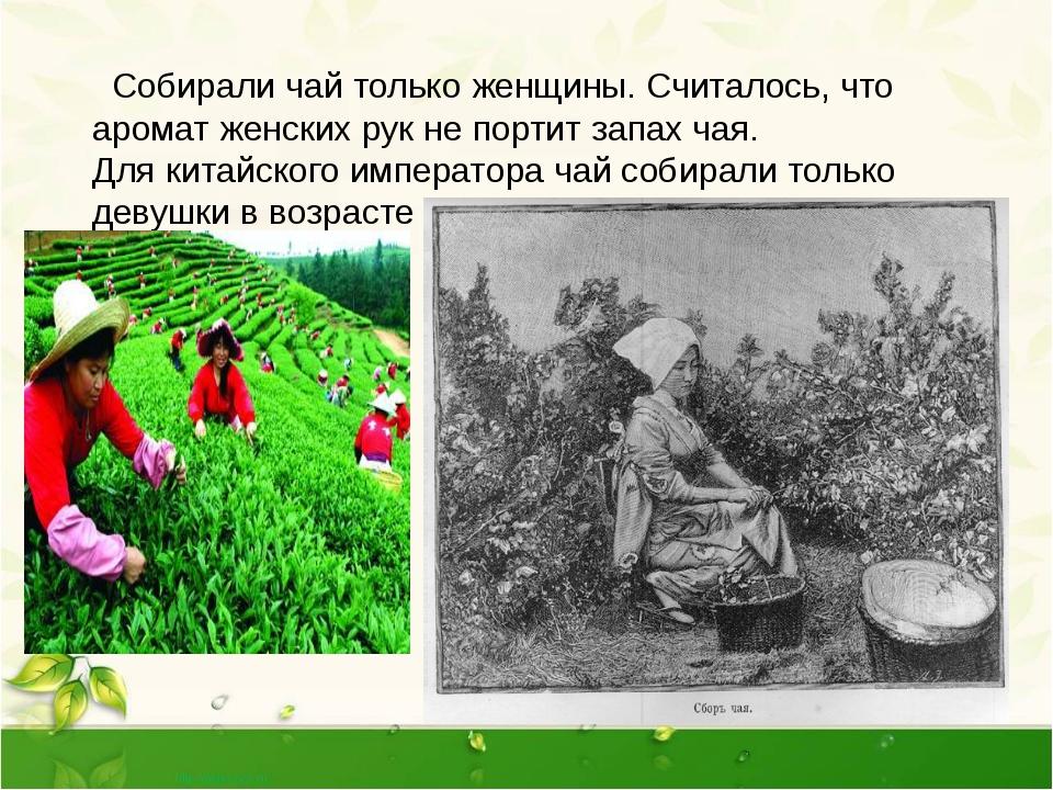 Собирали чай только женщины. Считалось, что аромат женских рук не портит зап...