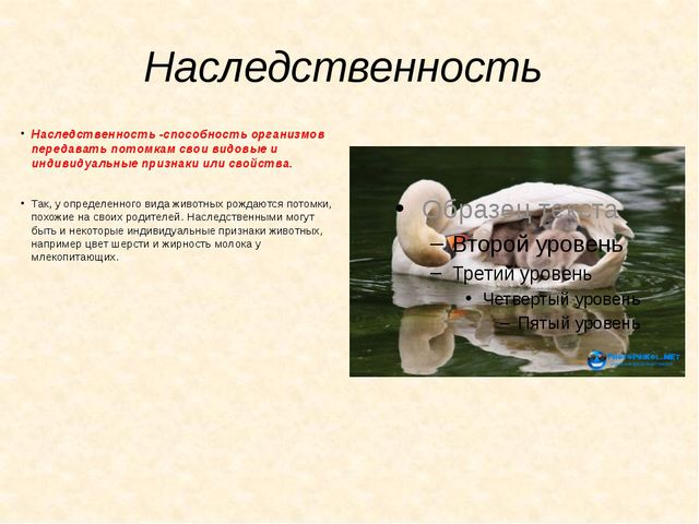 Наследственность Наследственность -способность организмов передавать потомкам...