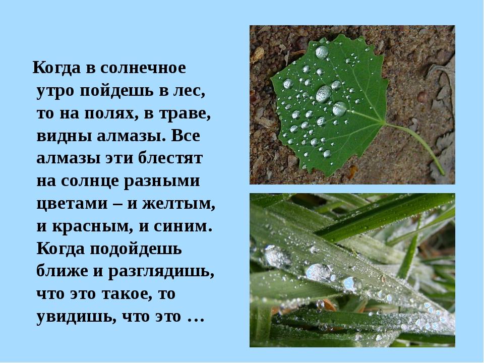 Когда в солнечное утро пойдешь в лес, то на полях, в траве, видны алмазы. Вс...