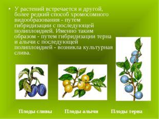 У растений встречается и другой, более редкий способ хромосомного видообразов