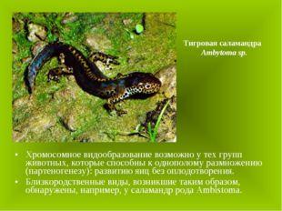 Хромосомное видообразование возможно у тех групп животных, которые способны к