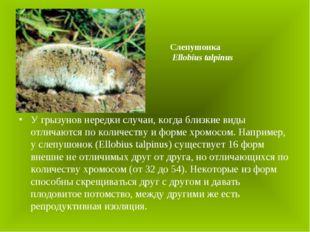 У грызунов нередки случаи, когда близкие виды отличаются по количеству и форм