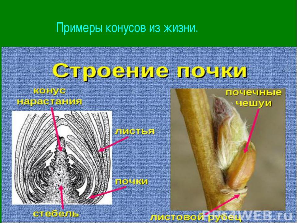 Примеры конусов из жизни.