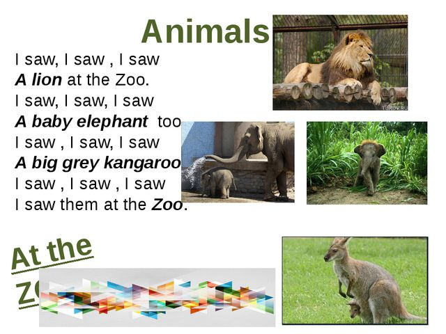 Animals I saw, I saw , I saw A lion at the Zoo. I saw, I saw, I saw A baby el...