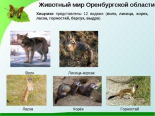 Лисица-корсак Волк Хищники представлены 12 видами (волк, лисица, хорек, ласка