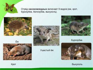 Ёж Бурозубка Крот Выхухоль Отряд насекомоядных включает 9 видов (еж, крот, бу