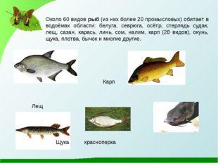 Около 60 видов рыб (из них более 20 промысловых) обитает в водоёмах области: