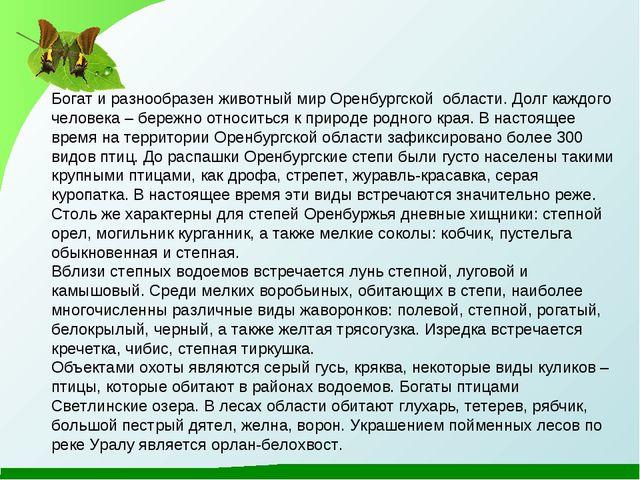 Богат и разнообразен животный мир Оренбургской области. Долг каждого человека...