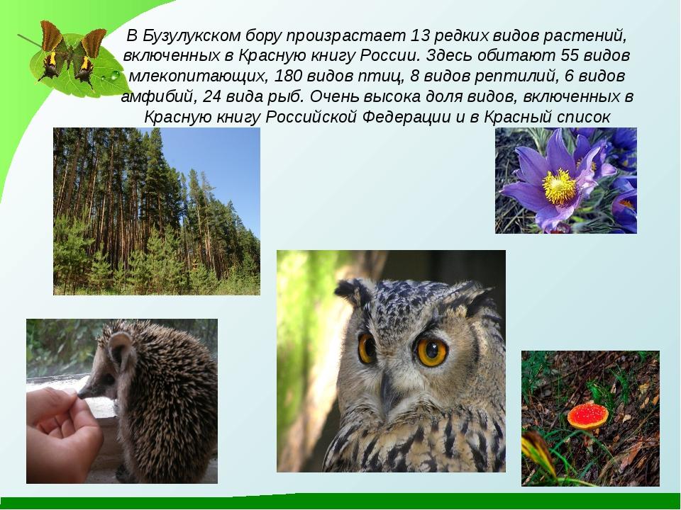 В Бузулукском бору произрастает 13 редких видов растений, включенных в Красну...