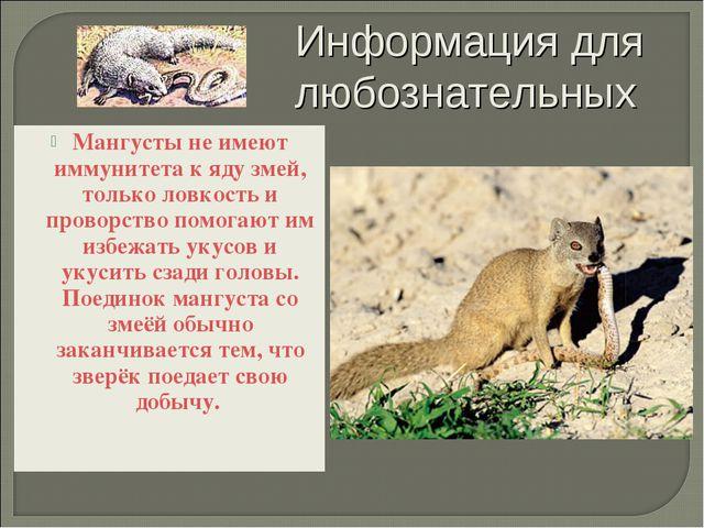Мангусты не имеют иммунитета к яду змей, только ловкость и проворство помогаю...