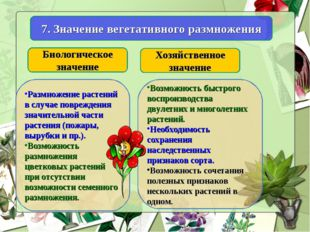 7. Значение вегетативного размножения Биологическое значение Хозяйственное зн