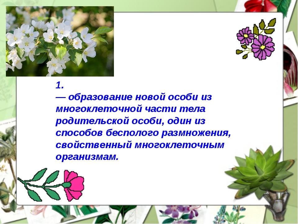 1. Вегетати́вное размноже́ние — образование новой особи из многоклеточной час...