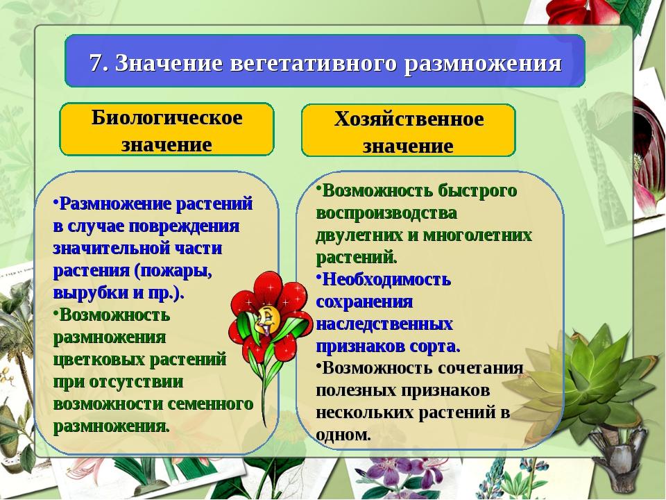 7. Значение вегетативного размножения Биологическое значение Хозяйственное зн...