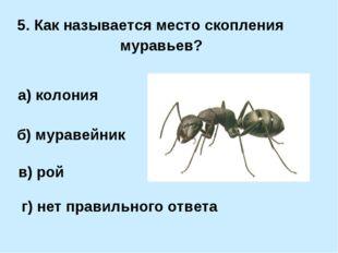 5. Как называется место скопления муравьев? а) колония б) муравейник в) рой г