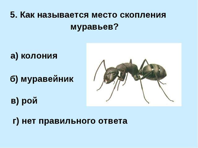 5. Как называется место скопления муравьев? а) колония б) муравейник в) рой г...