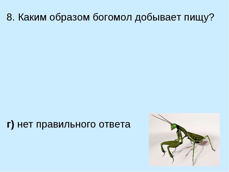8. Каким образом богомол добывает пищу? а) ловит на лету мелких насекомых в)...