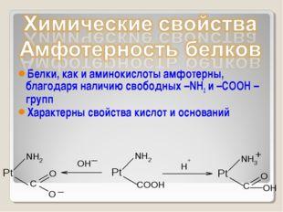 Белки, как и аминокислоты амфотерны, благодаря наличию свободных –NH2 и –СООН
