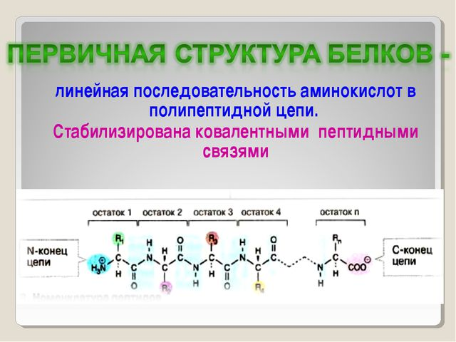 линейная последовательность аминокислот в полипептидной цепи. Стабилизирована...