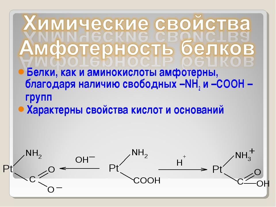Белки, как и аминокислоты амфотерны, благодаря наличию свободных –NH2 и –СООН...