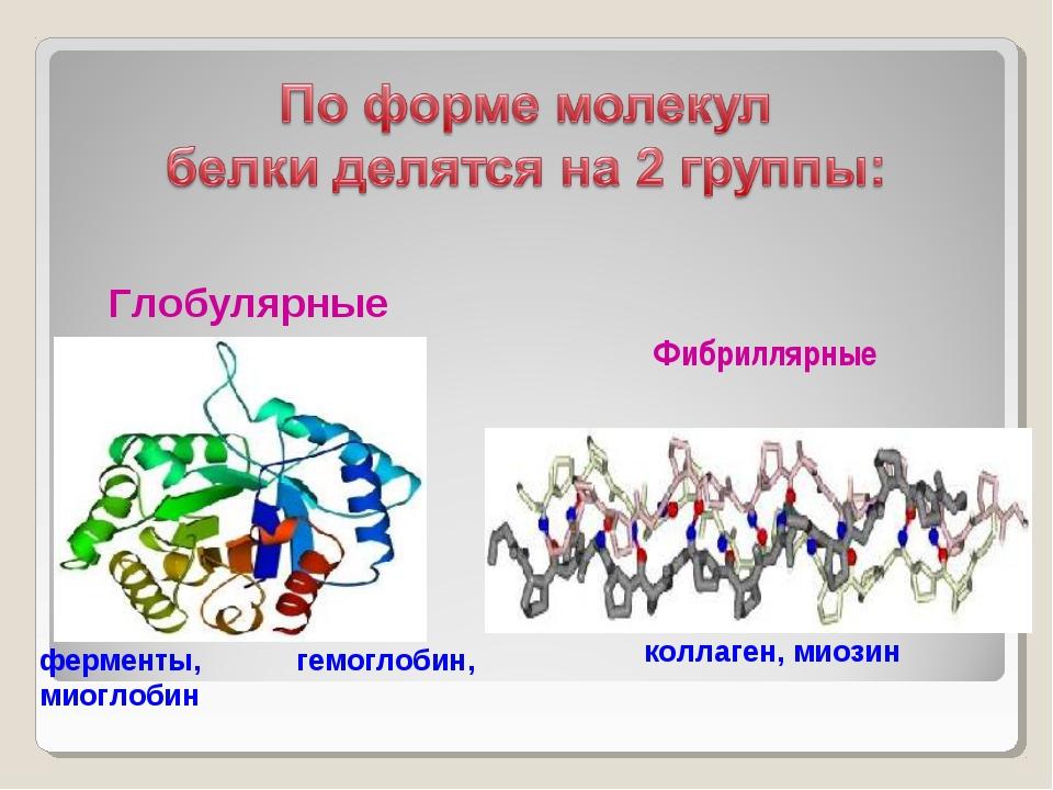 Фибриллярные ферменты, гемоглобин, миоглобин Глобулярные коллаген, миозин