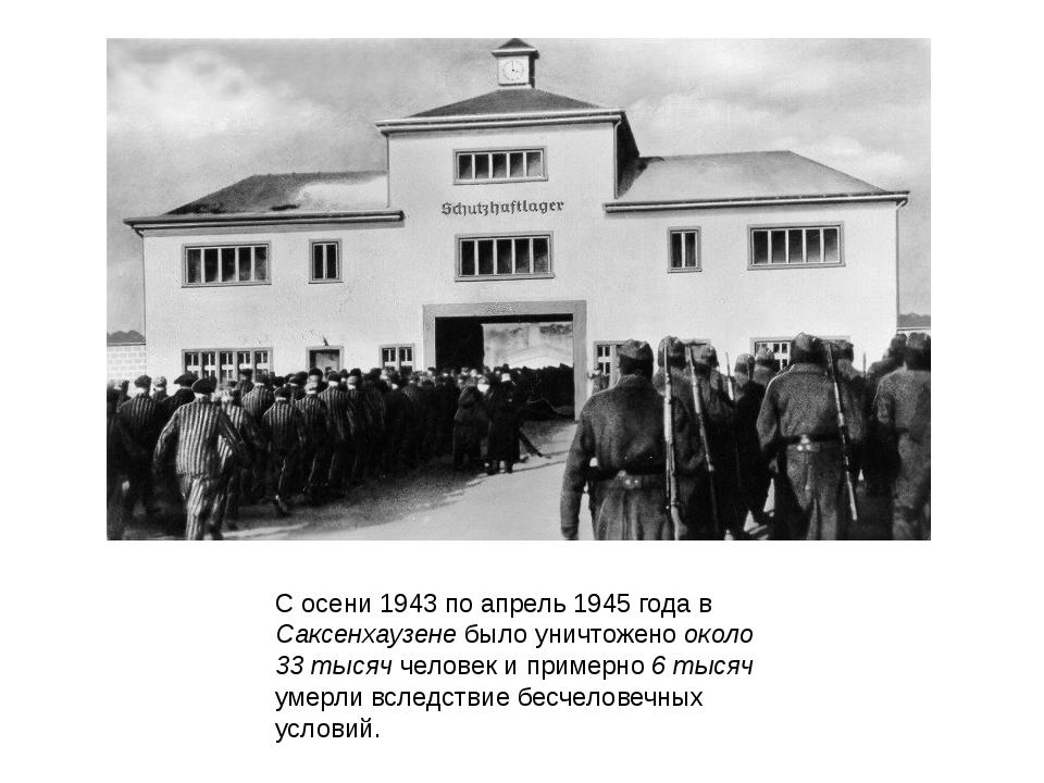 С осени 1943 по апрель 1945 года в Саксенхаузене было уничтожено около 33 тыс...