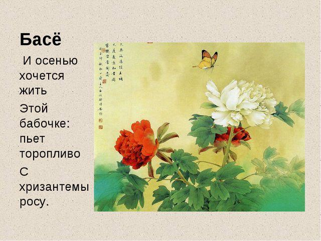 Басё  И осенью хочется жить Этой бабочке: пьет торопливо С хризантемы росу.