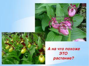 А на что похоже ЭТО растение?