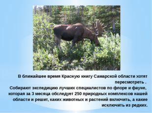 В ближайшее время Красную книгу Самарской области хотят пересмотреть . Собира