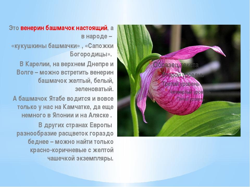 Это венерин башмачок настоящий, а в народе – «кукушкины башмачки» , «Сапожки...