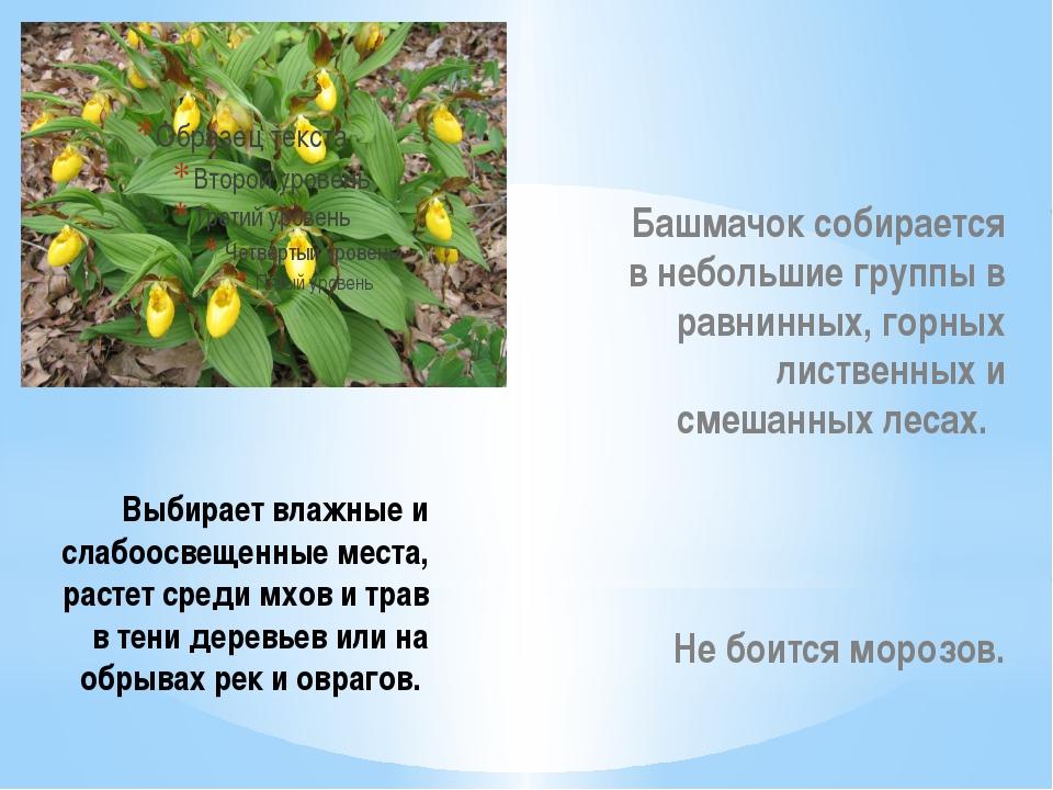 Выбирает влажные и слабоосвещенные места, растет среди мхов и трав в тени де...