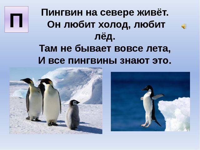 Пингвин на севере живёт. Он любит холод, любит лёд. Там не бывает вовсе лета,...
