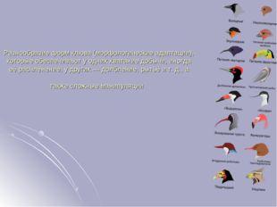 Разнообразие форм клюва (морфологические адаптации), которые обеспечивают у о