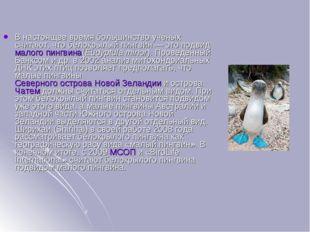 В настоящее время большинство учёных считают, что белокрылый пингвин— это по