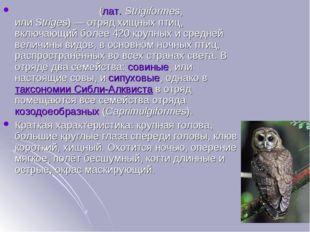 Совообра́зные(лат.Strigiformes, илиStriges)— отряд хищных птиц, включающи