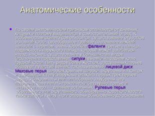 Анатомические особенности По своим анатомическим признакам отличаются от днев