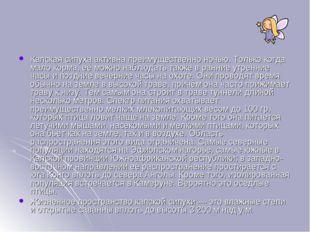 Капская сипуха активна преимущественно ночью. Только когда мало корма, её мож