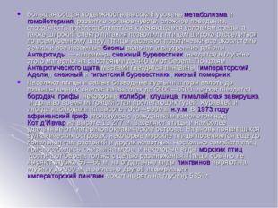 Большая общая подвижность, высокий уровеньметаболизмаигомойотермия, развит